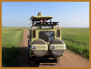 serengeti-safari-cheeta-op-dak-safari-jeep